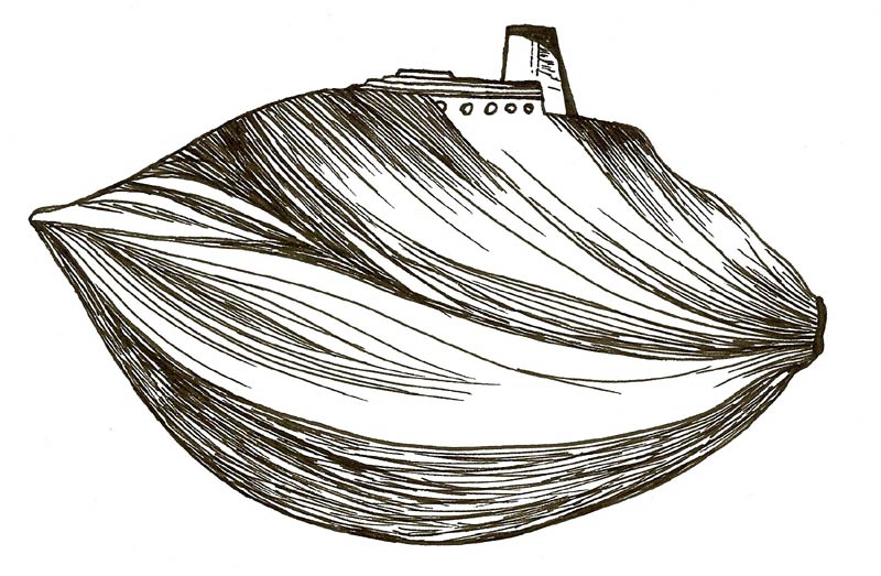 Claire Coté, the transformation of a palm seed to a boat in her exploration of biomimicry