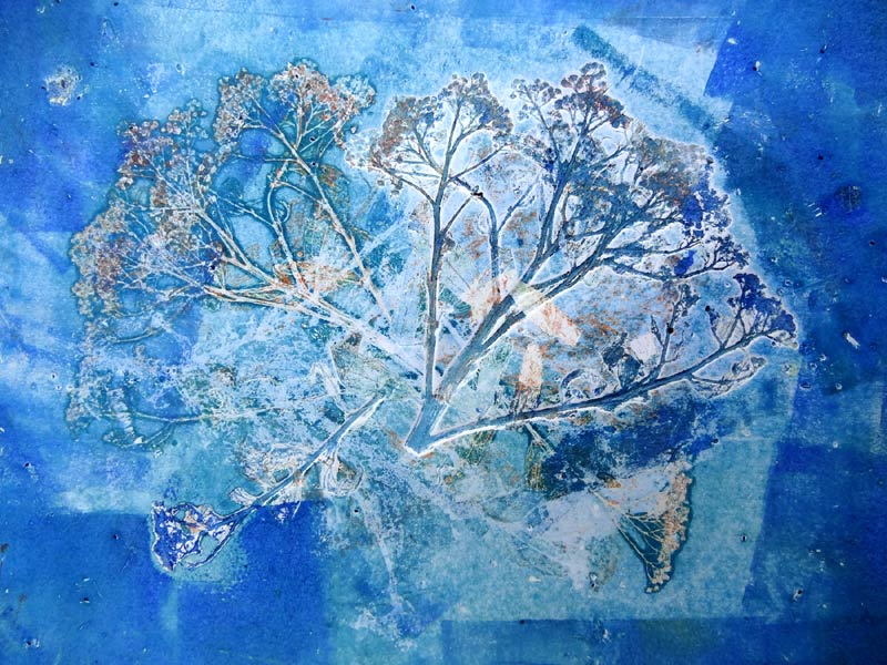 Linda Melvin Graham, seed head monoprint created at Processus Art Life