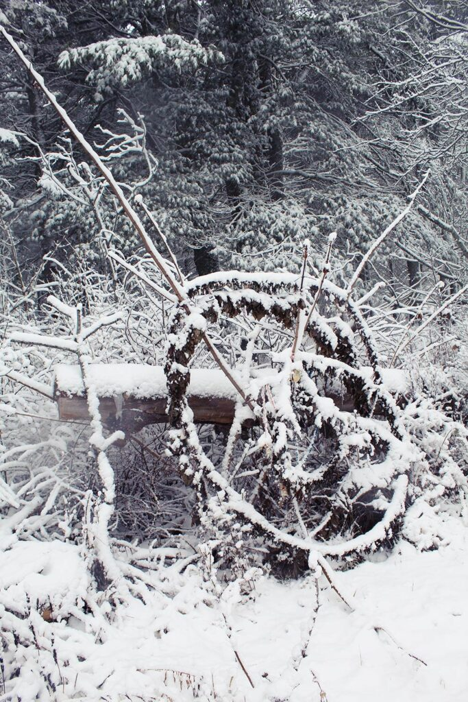 Meadow Mandala in winter. The structure persists into the winter and highlight the animal passages through the underbrush.