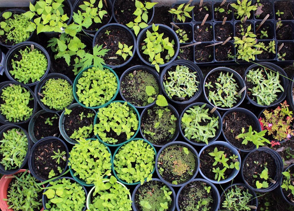 July wildflower seedlings